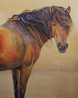 Invitation-60x48-Sable-Island-Pony-L-800x